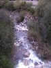 Plima