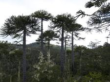 Nahuelbuta National Park