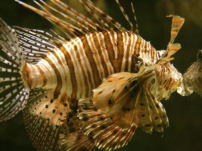 Poisson Shark Reef