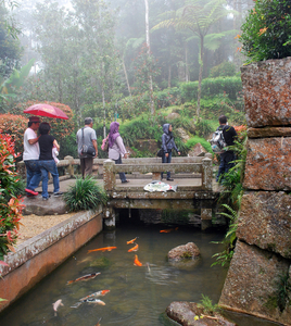 Pond At Bukit Tinggi