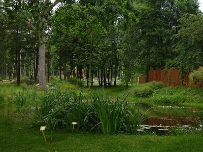 Pond In Botanic Garden