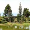 Pond - Jardim Botânico De Brasília
