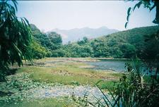 Pookode Lake In Summer
