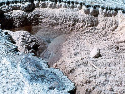 Porkchop Geyser In Silent Mode - Yellowstone - USA