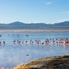 Potosi Laguna Colorada - Bolivia