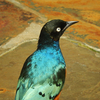 Pretty Black, White And Teal Bird