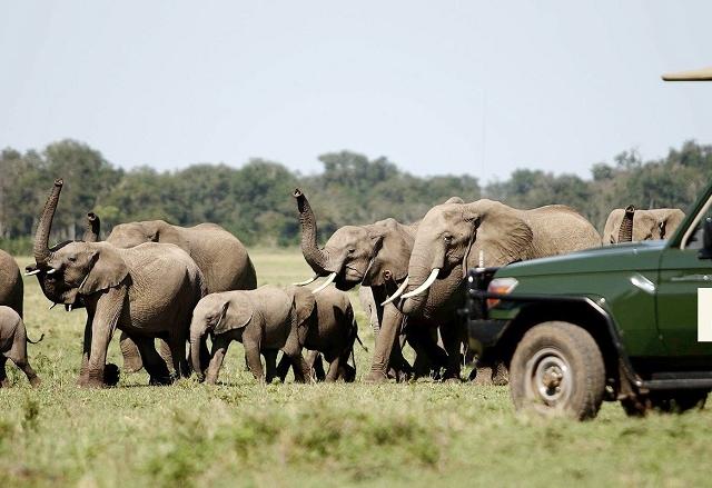 Best of Kenya Safari Package Photos