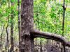 Pulau Kukup Johor National Park - View