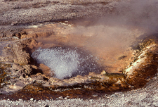 Pump Geyser - Yellowstone - USA