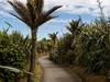@ Punakaiki - Paparoa NP - South Island NZ