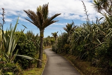 @ Punakaiki - Paparoa NP - South Island NZ