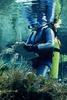 Pupu Springs Diver