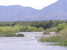 Breede River With Langeberge In The Distant