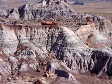 Painted Desert Wwith Logs Of Petrified Wood