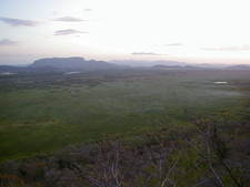 Palo Verde Rocaview