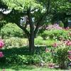 Pardee Rose Garden