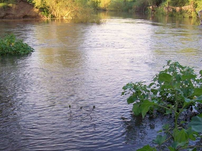 Paterson River At Vacy
