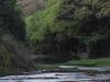 Pendjari  Fluss
