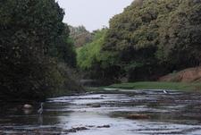 Pendjari River Within The National Park
