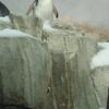 Penguin In Captivity
