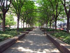 Inside The Shade Trees
