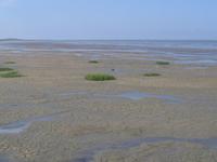 Lower Saxony Wadden Sea National Park