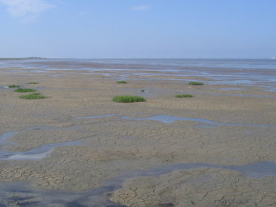Lower Saxon Wadden Sea National Park