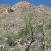 Pusch Peak From Pima Canyon