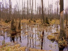 Swamps In Kampinos Park