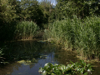 Pond In Camley Street Natural Park