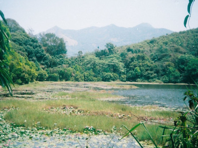 Pookkottu Lake Summer
