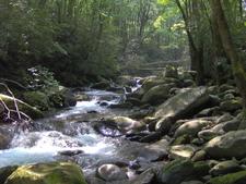 Porters Creek In Greenbrier