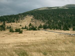 Smogornia