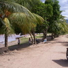 Palm Trees In Puerto Amberes