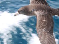 Two Peoples Bay y Monte Manypeaks Área Importante para las Aves