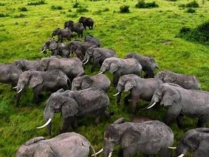 Lions And Gorilla Safari Photos