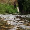 River Quaggy