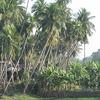 Raghurajpur Village