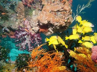 Raja Ampat Marine Treasure - Papua - Indonesia
