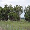 Rangitaiki Wetlands