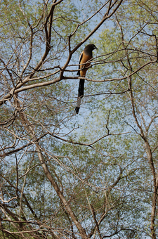 Ranthambore Birdlife