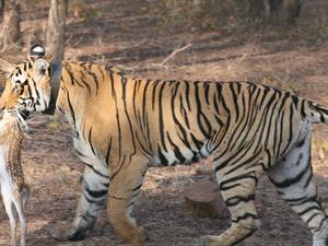Nature Adventure Rajashtan Safari Land of Tigers Fotos