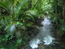 Ratapihipihi Scenic Reserve Walk - North Island - New Zealand