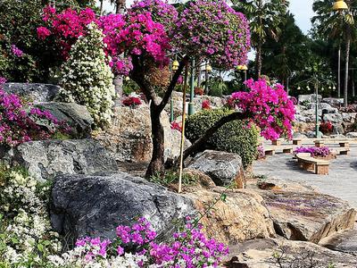 Ratchaphruek Garden View
