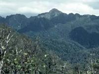 Raukumara Forest Park