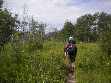 Red Eagle Trail Hiker - Glacier - Montana - USA