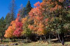 Red Rock Trail 294 - Tonto National Forest - Arizona - USA