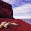 Red Sand Beach, Ecuador