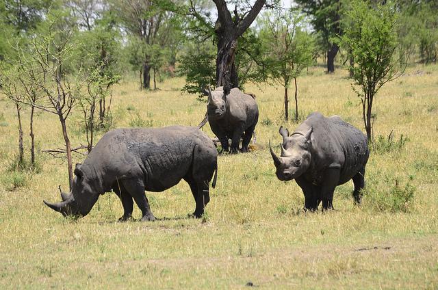 Safari Dans Les Grands Parcs Du Nord De La Tanzanie Photos