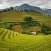 Rice Fields In Mu Cang Chai - Vietnam